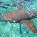 Snorkeling Shark Ray Alley : UnBelizeable!