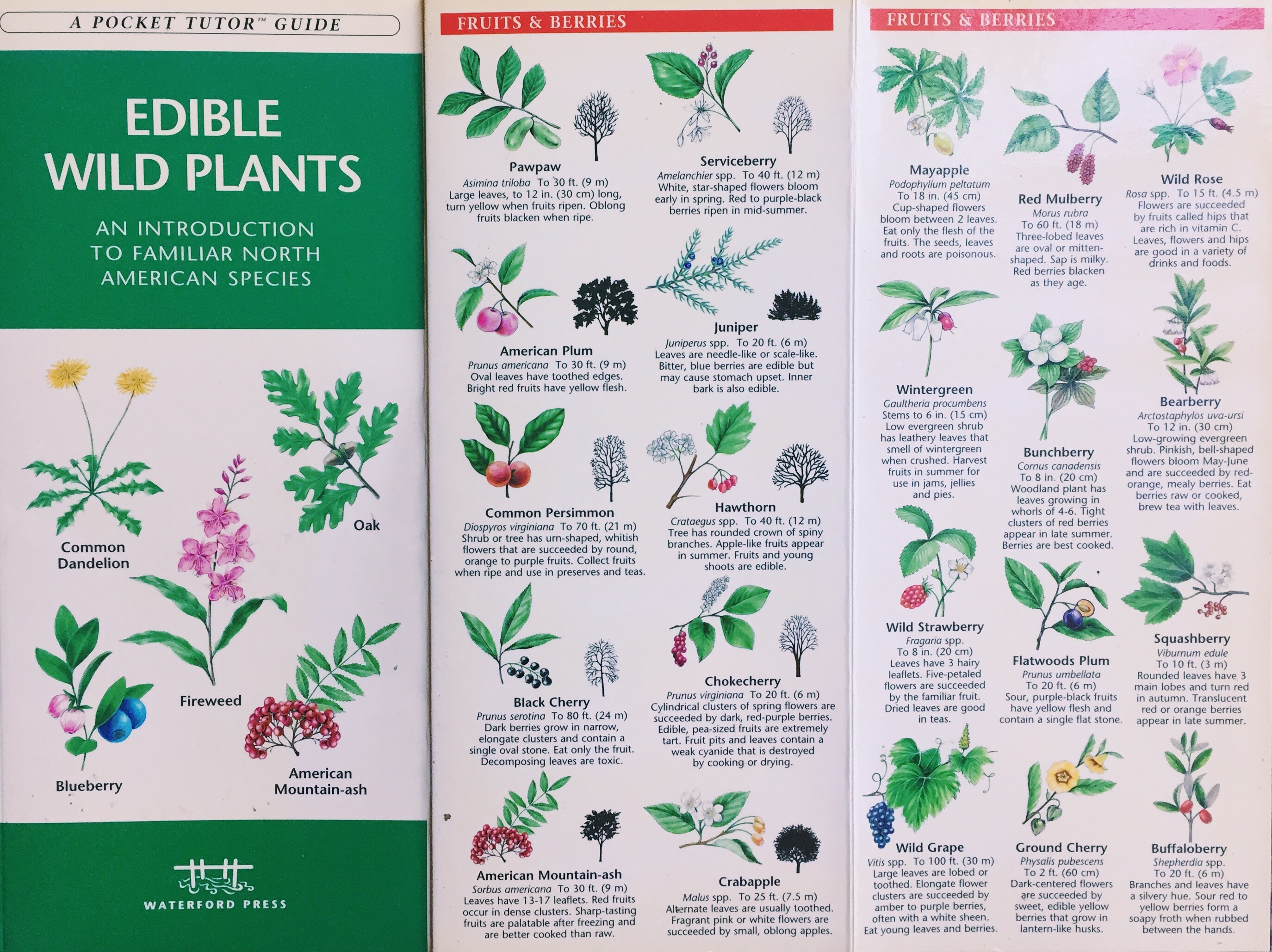 edible plants guide